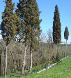 Cimitero ebraico di Monte San Savino